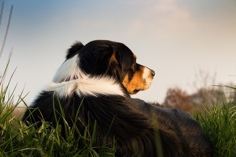 How Long Should My Dog Stay in the Sun?