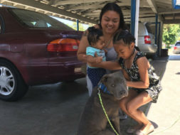 Heroic Pit Bull Puppy Saves a Baby from a House Fire