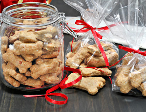 DIY dog treats and toys