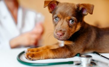 Essential Things To Do Right After Adopting a Dog