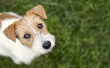 Tips for Surviving Your Dog's Terrible Twos